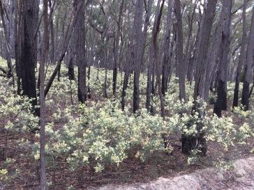Tallaganda forest.